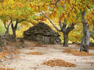 Cabañas de madera Valle del Jertet