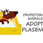 El Rincón del Jerte colabora con la protectora Adopta Plasencia